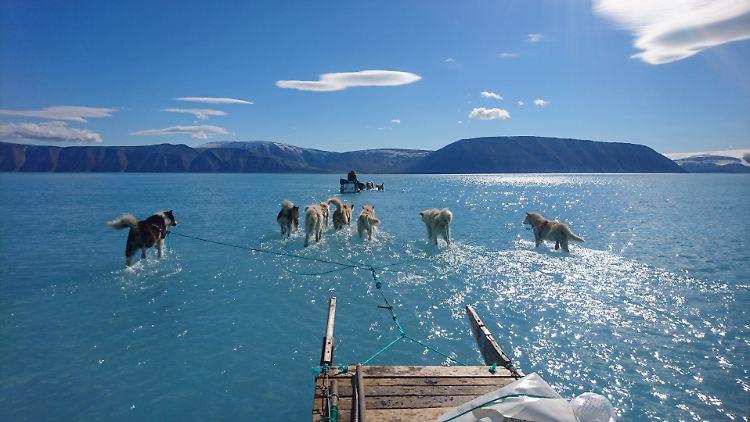 Bild von Schlittenhunden auf Grönlandeis geht um die Welt