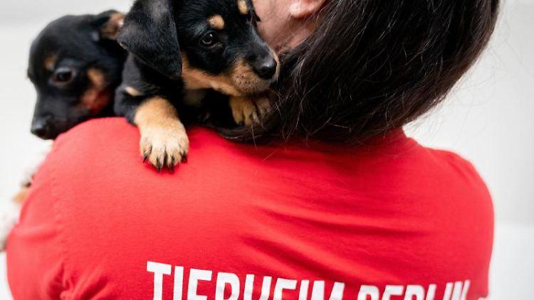 Tierheim Berlin schränkt Tierabgabe wegen Hitze ein. Foto: Kay Nietfeld/Archivbild
