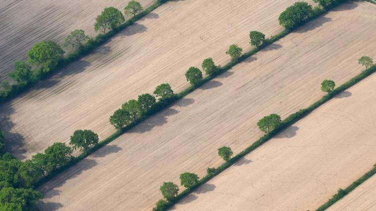 Eine Luftaufnahme zeigt grüne Baum- und Gestrüpphecken, sogenannte