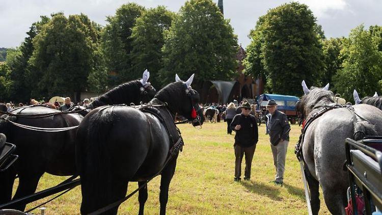 Pferde verschiedener Rassen und Größen stehen zum
