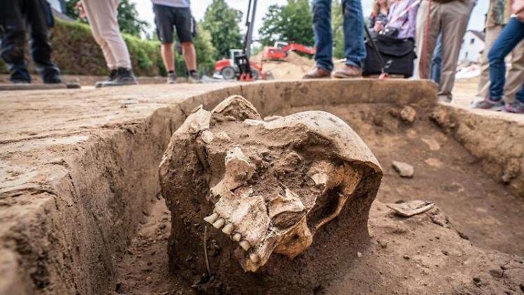 Der obere Teil eines Schädels aus der Steinzeit liegt freigelegt in einer Baugrube im nörldichen Stadtteil Harheim. Foto: Frank Rumpenhorst