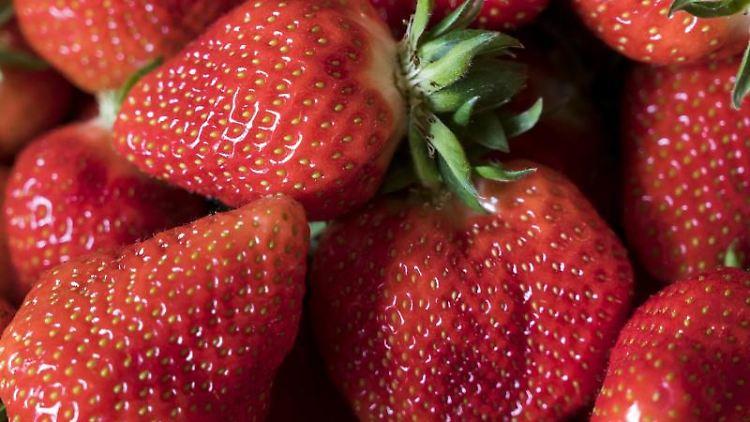 Erdbeeren Pflücken Wiesbaden