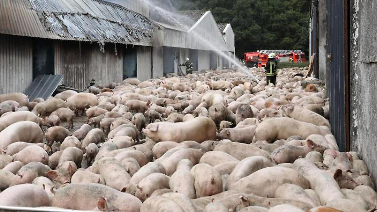 Brand einer Schweinemastanlage.Foto: Bernd Wüstneck