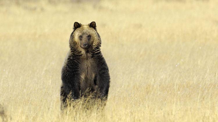 Fancy Bear.jpg