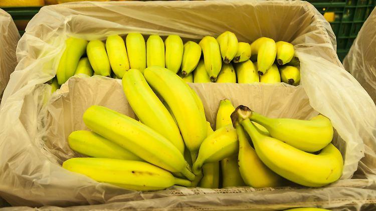 Bananen Aussterben