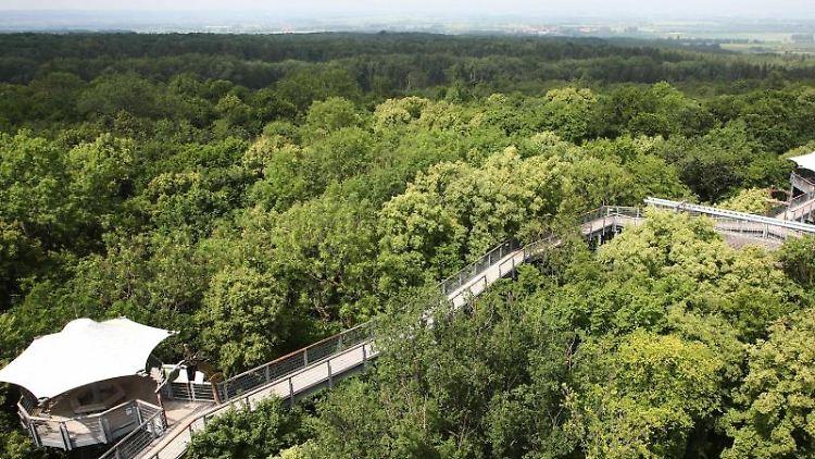 Blick auf den Baumkronenpfad im Nationalpark Hainich. Foto: Bodo Schackow/Archivbild