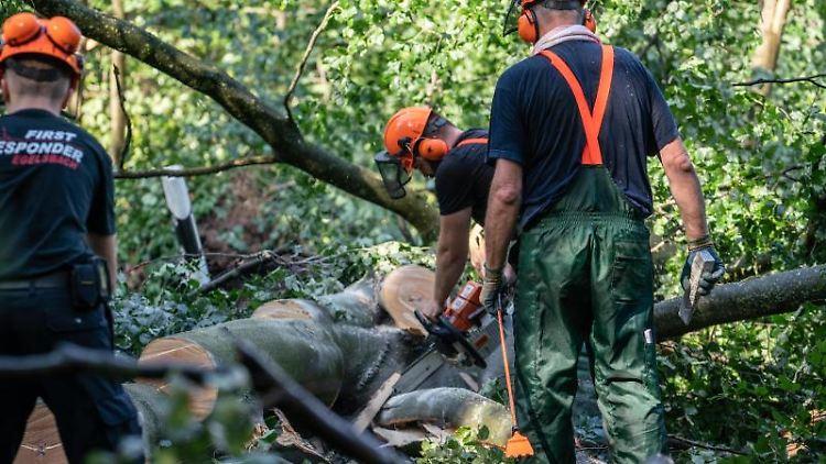 Arbeiter zersägen umgestürzte Bäume. Foto: Frank Rumpenhorst
