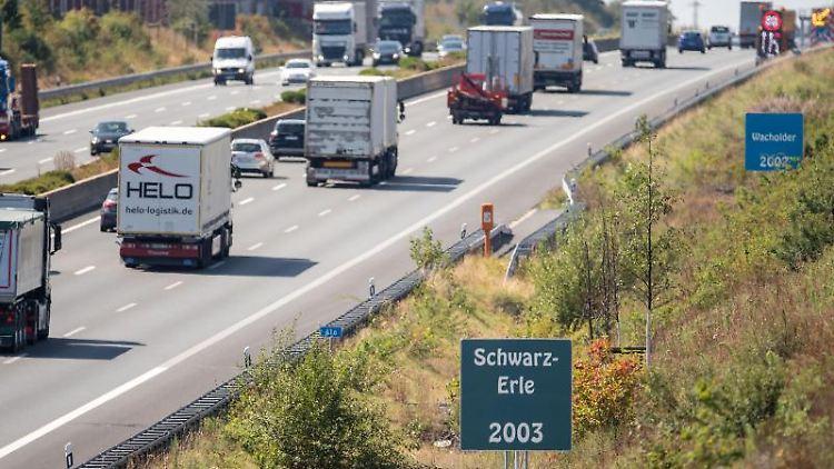 Vertrocknete Schwarz-Erlen stehen neben der Autobahn A4. Foto: Marius Becker