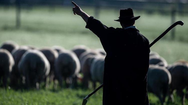 Zu sehen sind ein Schäfer und Schafe auf einer Wiese. Foto: Fabian Sommer