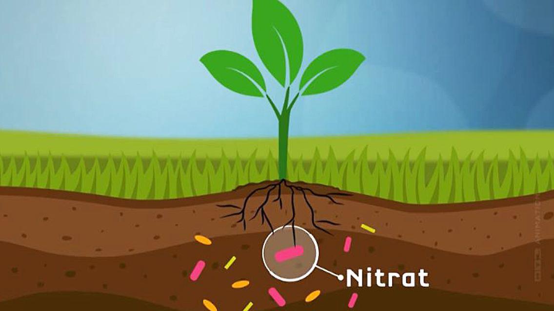 Nitrat EU Grundwasser.JPG