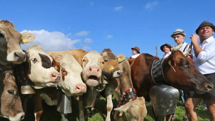 Hirten stehen mit ihren Herden am Viehscheidplatz. Foto: Karl-Josef Hildenbrand/Archivbild