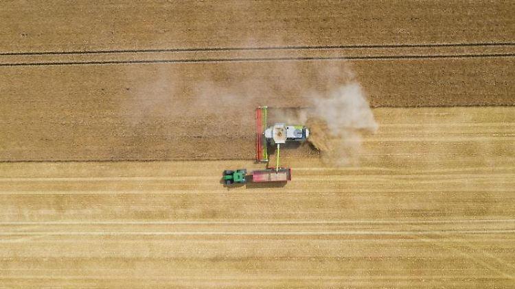 Ein Mähdrescher erntet ein Kornfeld ab. Foto:Christophe Gateau/Archivbild