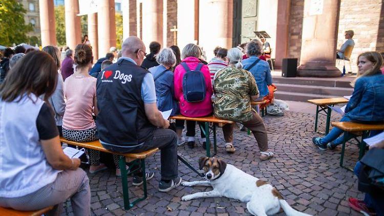 Ein Hund liegt während des ersten ökumenischen Tiergottesdienstes auf dem Platz vor der Kirche St. Stephan. Foto: Philipp von Ditfurth