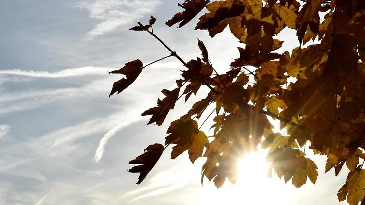 Die Herbstsonne scheint zwischen gefärbten Laub hervor. Foto: Angelika Warmuth/dpa/Archiv