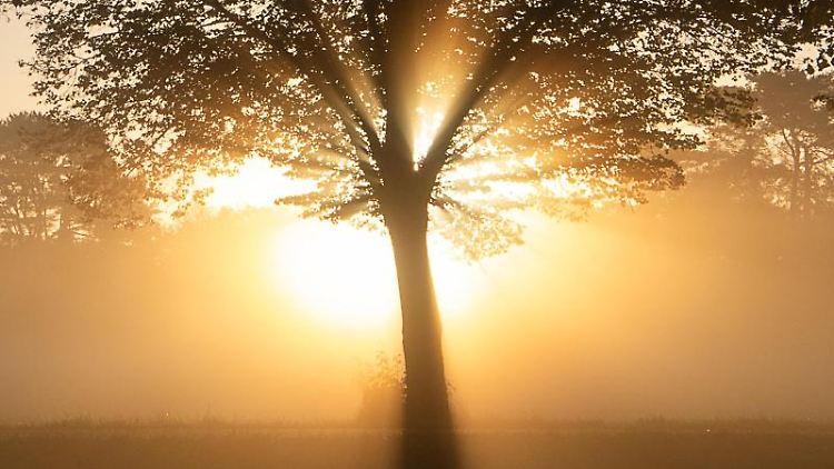 Die Sonne geht hinter einem Baum im Nebel auf. Foto: Sebastian Gollnow/dpa/Archivbild