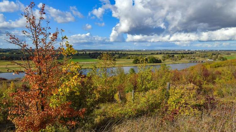 Blick vom polnischen Ufer der Oder auf den Nationalpark. Foto: Patrick Pleul/zb/dpa