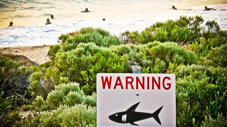 Tourismus: Zwei britische Touristen bei Hai-Attacke in Australien schwer verletzt