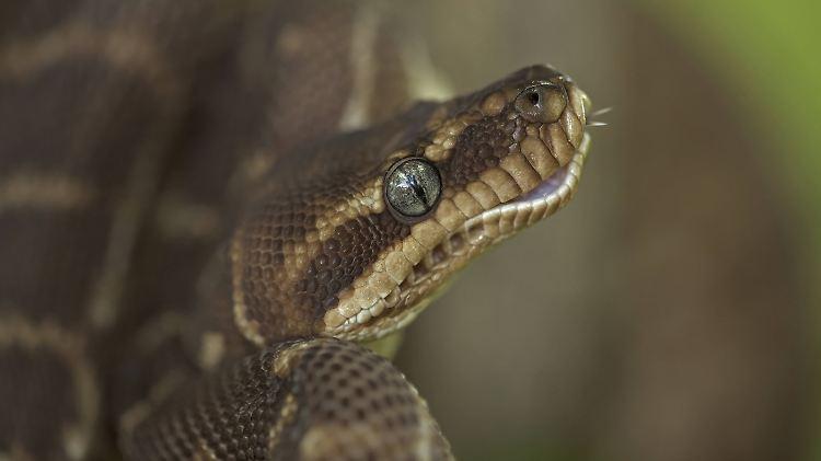 Frau mit Python um den Hals tot in den USA gefunden