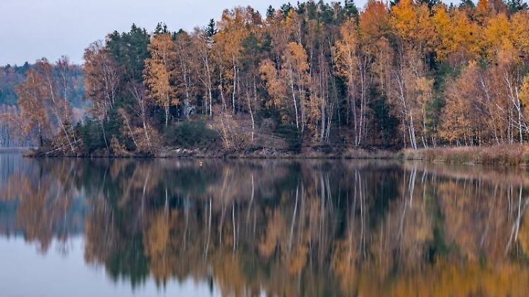 Herbstlich gefärbte Bäume spiegeln sich im Abendlicht im Knappensee. Foto: Armin Weigel/dpa