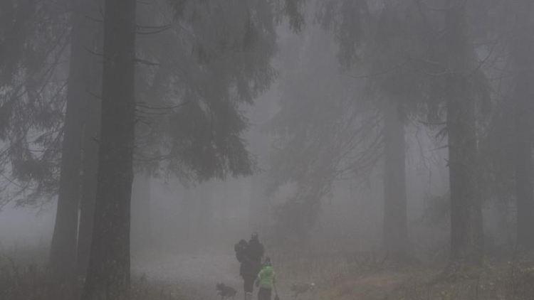 Dichte Nebelschwaden hängen zwischen den Bäumen auf dem Feldberg im Taunus. Foto: Dorothee Barth/dpa