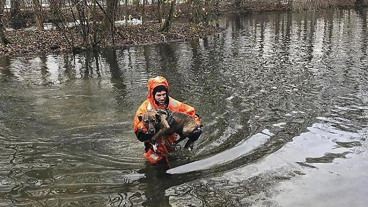 In einem sogenannten Überlebensanzug trägt ein Feuerwehrmann Hündin Inci durch Wasser zurück an Land. Foto: Berufsfeuerwehr München/dpa