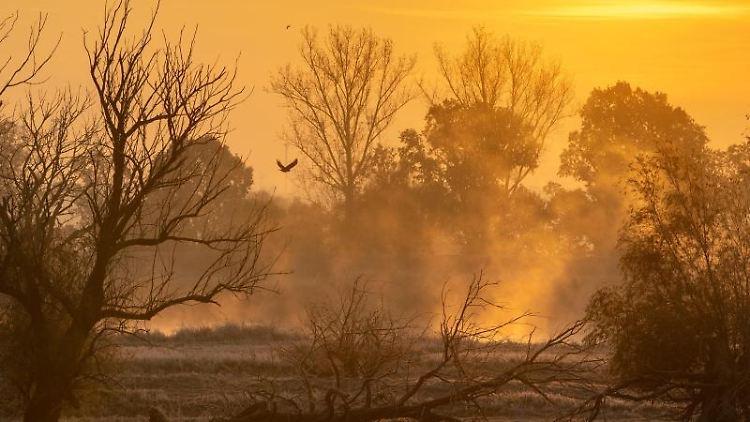 Wasserdampf steigt im Gegenlicht des Sonnenaufgangs auf. Foto: Patrick Pleul/zb/dpa/Archivbild