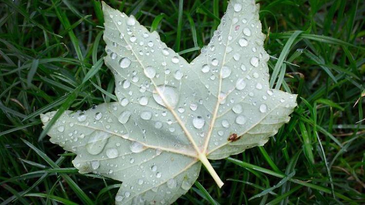 Wassertropfen perlen auf einem Blatt, dass im Regen in einem Park liegt. Foto: Martin Gerten/dpa