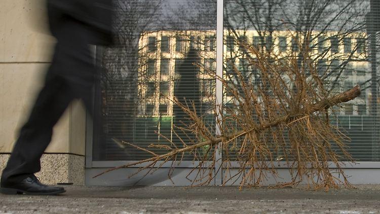 Weihnachtsbaum Nadeln.Weihnachtsbaum Bis Ostern Grün Hormon Lässt Die Nadeln Rieseln N