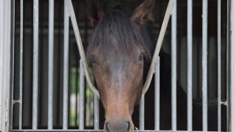 Ein Pferd schaut durch ein Gitter. Foto: Sebastian Kahnert/zb/dpa/Archivbild