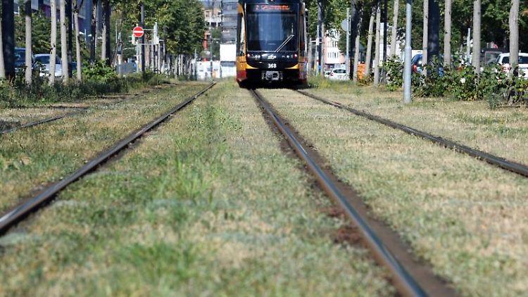 Eine Straßenbahn in Karlsruhe. Foto: Uli Deck/dpa/Archivbild