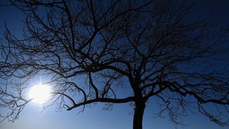 Die Sonne scheint durch Äste eines Baumes. Foto: Nicolas Armer/dpa/Archivbild