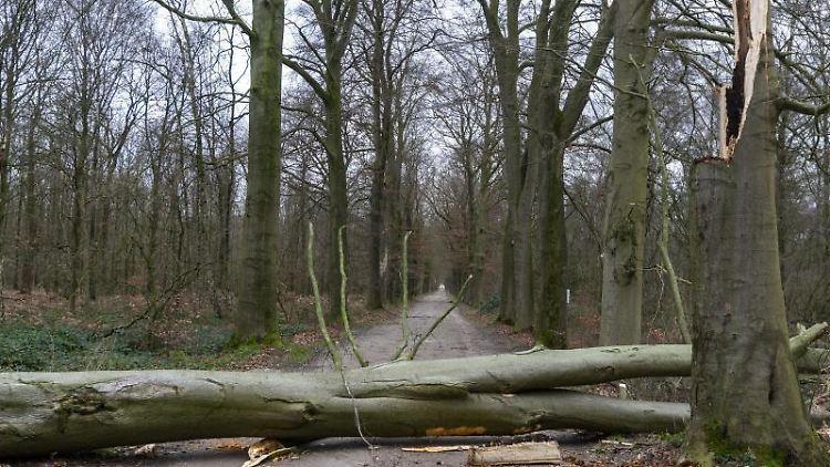 Ein Baum liegt auf einem Weg. Das Sturmtief
