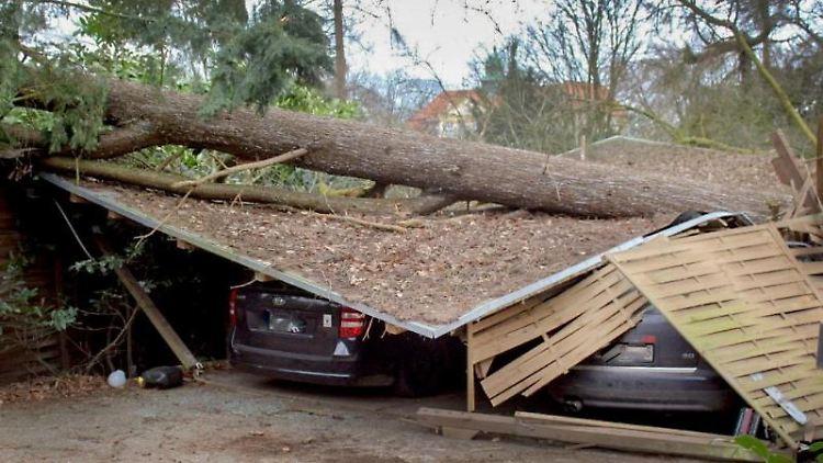 Ein umgestürzter Baum liegt auf Unterstellplätzen von Autos. Foto: Daniel Grotjans/dpa/Archivbild