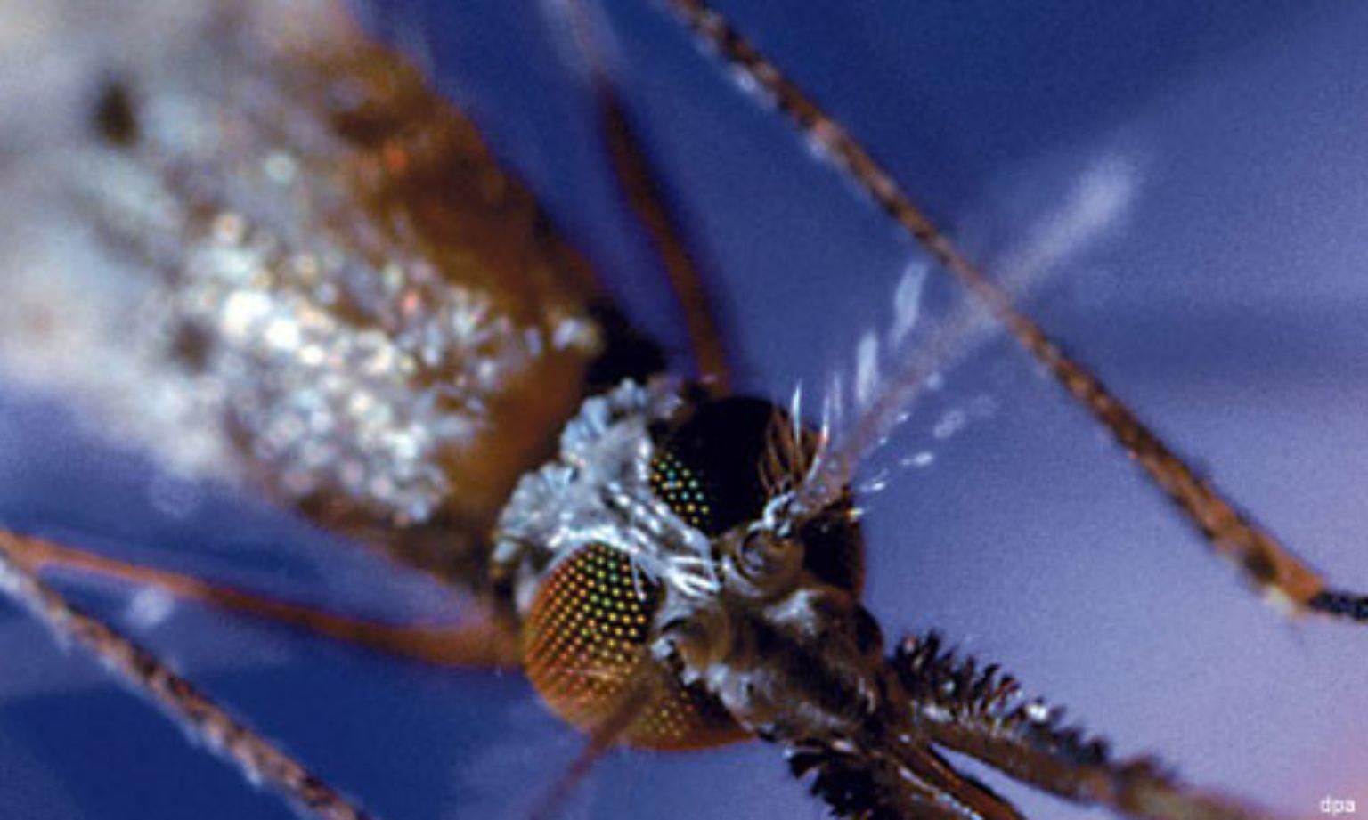 Jeder Zusammenprall eines Protonenpaars setzt soviel Energie frei wie zwei kollidierende Mücken.