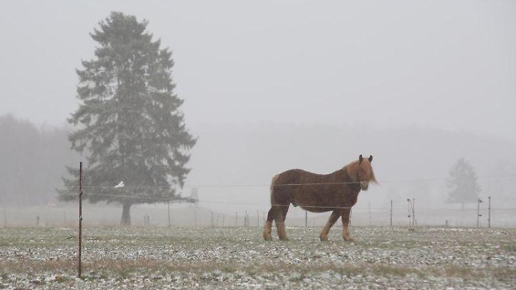 Ein Pferd steht auf einer verschneiten Koppel. Foto: Matthias Bein/dpa-Zentralbild/ZB