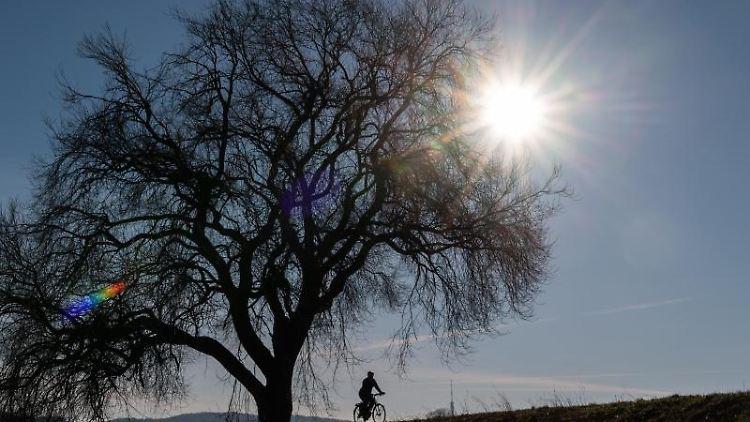 Ein Radfahrer fährt bei Sonnenschein an einem Baum vorbei. Foto: Robert Michael/dpa-Zentralbild/ZB/Symbolbild