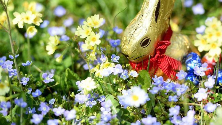 Ein Osternest mit Schokohase und Schokoladeneiern ist im Garten zwischen Frühlingsblumen versteckt. Foto: Angelika Warmuth/dpa/Symbolbild