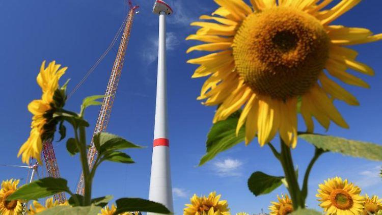 Eine Windenergieanlage im Aufbau hinter einem gelb blühenden Sonnenblumenfeld. Foto: Patrick Pleul/zb/dpa/Symbolbild