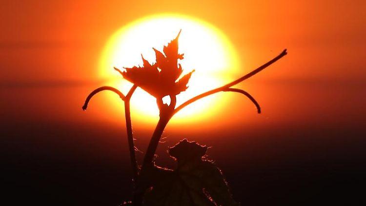 Das Blatt einer Weinrebe, aufgenommen vor der aufgehenden Sonne. Foto: Karl-Josef Hildenbrand/dpa
