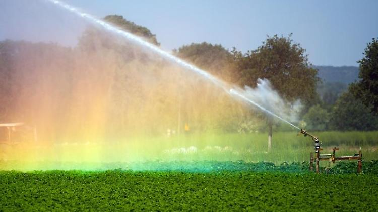 Ein Feld wird bewässert. Foto: Federico Gambarini/dpa/Symbolbild