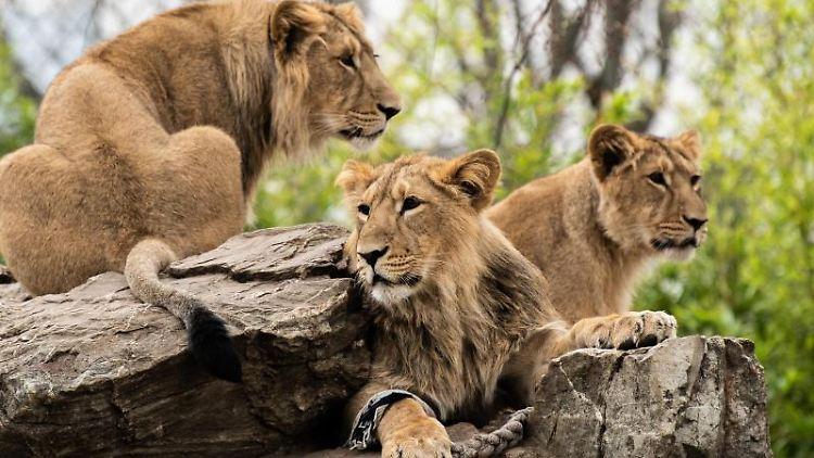 Hessen Zoo
