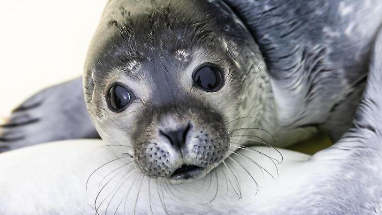 Blick auf einen Seehund. Foto: Frank Molter/dpa/Symbolbild