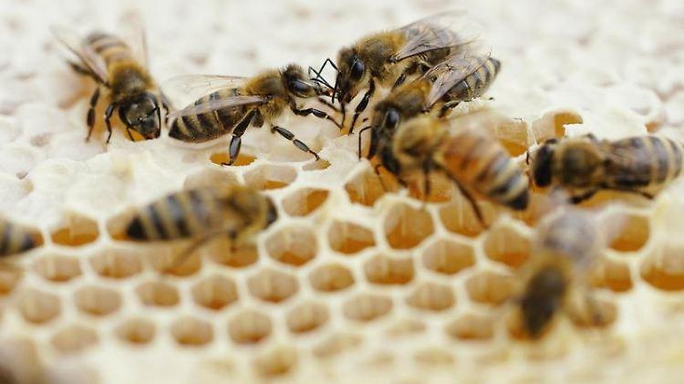 Bienen eines Bienenstocks. Foto: Uwe Anspach/dpa/Symbolbild