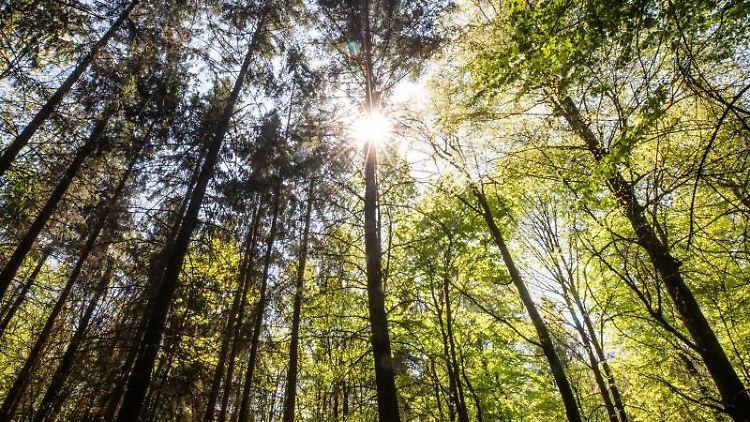 Die Sonne strahlt durch Bäume in einem Waldstück. Foto: Christoph Schmidt/dpa/Symbolbild