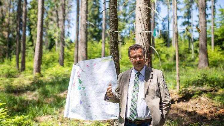 Der baden-württembergische Forstminister Peter Hauk (CDU) steht in einem Waldstück. Foto: Philipp von Ditfurth/dpa/Archivbild