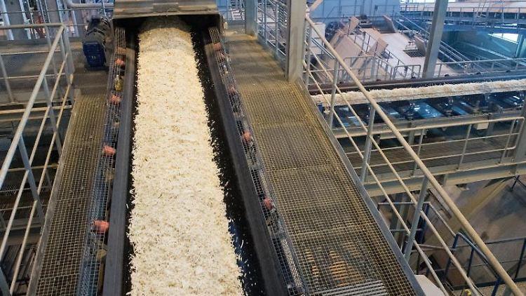 Im Rübenhaus der Zuckerfabrik Anklam werden Rübenschnitzel verarbeitet. Foto: Stefan Sauer/dpa/Archivbild