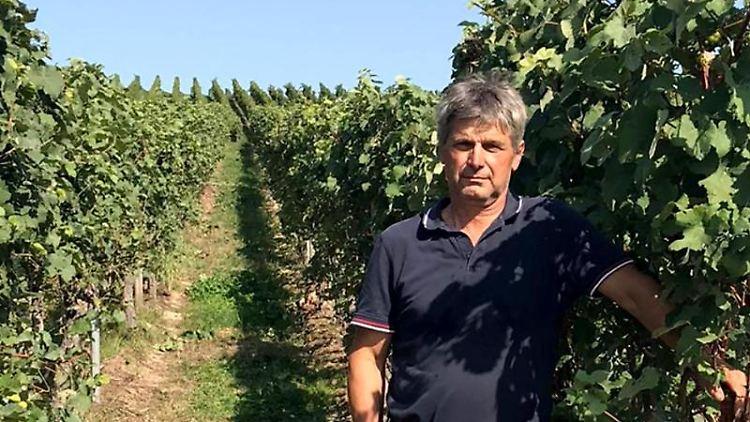 Der Winzer Klaus Moser steht in einem seiner Weinberge. Foto: Vanessa Moser/Klaus Moser/dpa