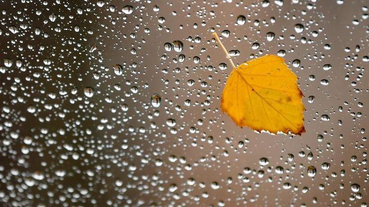 Ein gelb gefärbtes Blatt klebt an der vom Regen nassen Scheibe eines Pkw. Foto: Patrick Pleul/zb/dpa/Symbolbild