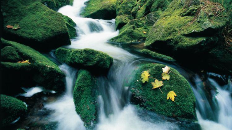 Ungewöhnliche und faszinierende Bilder hat der Naturfotograf Norbert Rosing festgehalten und in einem neuen Bildband zusammengetragen. (Bayerischer Wald, Gebirgsbach)