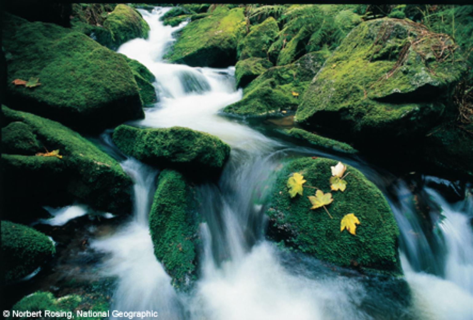 rückkehr zur blauen lagune stream